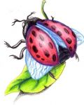 Ladybug on green leafs tattoo design