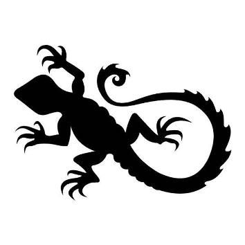 Black lizard with long tail