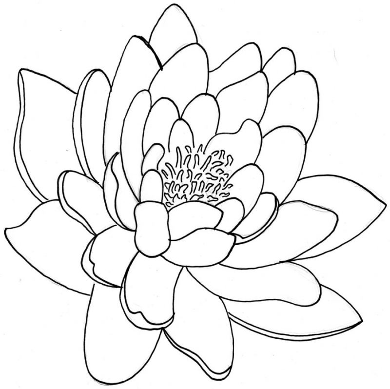 Line Drawing Name Designs : Outlines of chrysanthemum