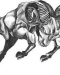 Aries zodiac tattoo design