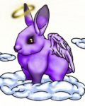 Violet rabbit with wings