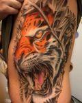Tiger among grasses