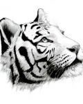 Abstracted tiger face