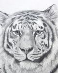 Tiger head tattoo design