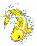 Yellow Koi fish with water.
